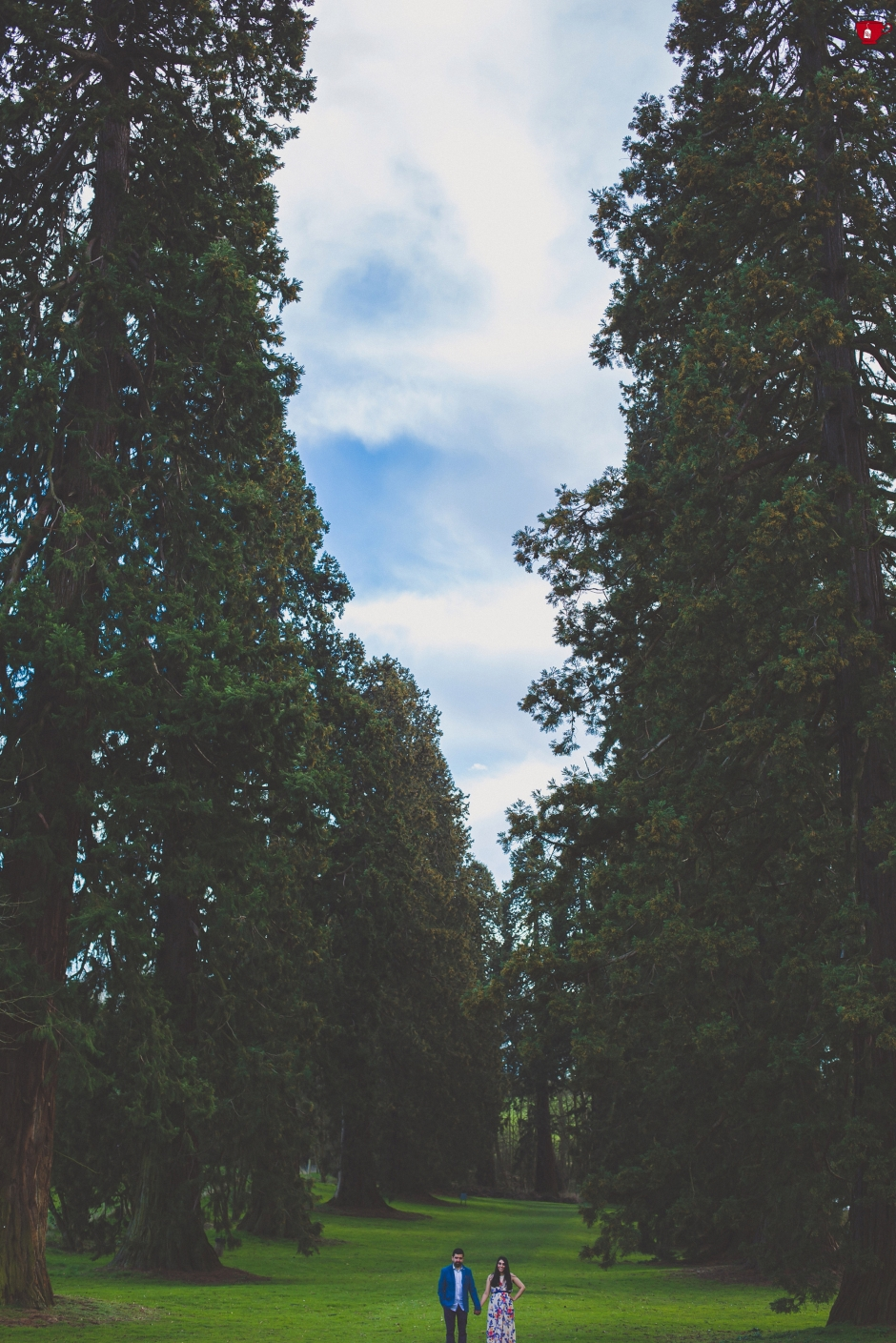 Lush trees at engagement shoot coventry